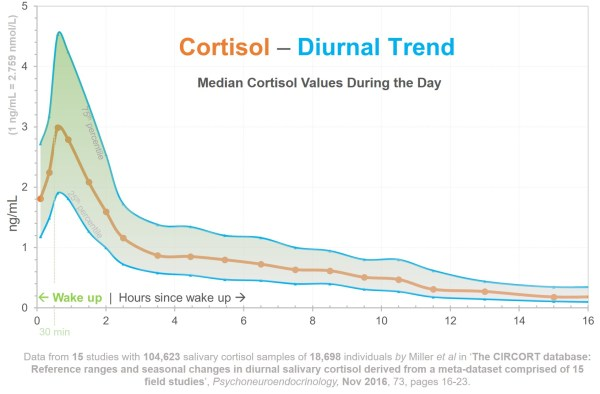 How Do Various Cortisol Levels Impact >> Cortisol Risk Factors Health Blog Rxhometest Com